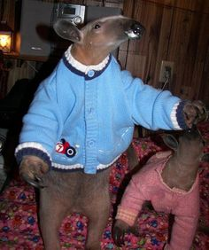 anteaters in sweaters...no explanation necessary