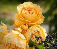 Quem não gosta de flores?Fonte: imgfave.com