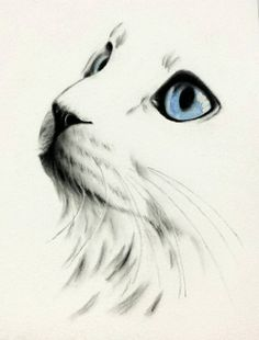 White Cat with blue eyes, Cat Sketch, Charcoal Cat Drawing, ORIGINAL White Cat Sketch Charcoal Sketch, Cat Drawing Weiße Katze mit blauen Augen Cat Sketch Charcoal Cat von JaclynsStudio Realistic Eye Drawing, Drawing Eyes, Manga Drawing, Drawing Sketches, Drawing Art, Easy Cat Drawing, Kitten Drawing, Gesture Drawing, Animal Drawings