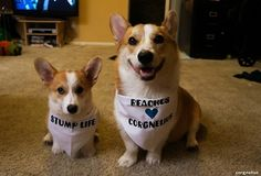 A few people asked if the boys would be at the Huntington Beach Corgi Meetup this Saturday. Well, they've been looking for an excuse to wear their bandanas, so we'll see you guys there!