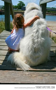 Great Pyrenees - A girl can never have too many big dogs. I Love Dogs, Puppy Love, Good Dogs For Kids, Cute Big Dogs, Great Pyrenees Puppy, Adorable Puppies, Animals Beautiful, Cute Animals, Animals Kissing