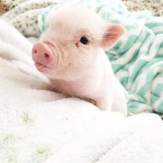 The Heartmelting Friendship Of A 2-Year-Old Girl And Her Piglet | Bored Panda