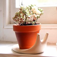 Mini Terracotta Plant Pot with Snail Saucer at What You Sow. The Pot measures high and wide and the snail plate is high and long. Cacti And Succulents, Potted Plants, Garden Plants, Indoor Plants, Cactus Planta, Cactus Y Suculentas, Terracotta Plant Pots, Ceramic Plant Pots, Earthenware Clay