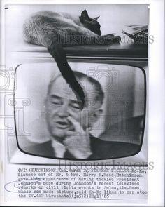 1965 Press Photo Ko-Ko, Siamese Cat of Mr. and Mrs. Harry H. Reed, Hutchinson