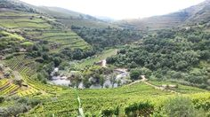 The old Corgo line.. #landscape  #countryside  #corgo  #douro  #linhadocorgo  #portugal by manuel_festa