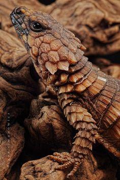 marrone---➽brunneis➽καφέ ➽brown➽braun➽marrón➽коричневый➽褐色➽بنى