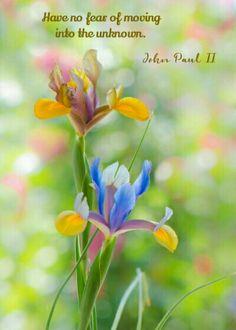 Iris Bokeh, by ThyBruns. Iris Flowers, Flowers Nature, Paper Flowers, Beautiful Flowers, Yellow Flowers, Planting Flowers, Bokeh Photography, Iris Garden, Morning Flowers