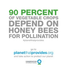 90% of vegetable crops depend on honey bees for pollination! That's why we've got to protect the planet that provides.