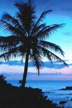 Palm tree with sunset