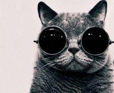 Imagine all the kitties <3