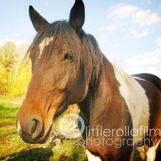 Pet Portraits - Kylee