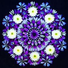 Rangoli Designs Flower, Flower Rangoli, Flower Mandala, Flower Art, Mandalas Painting, Mandala Artwork, Flowers Gif, Dried Flowers, Lotus Logo