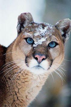 #Nature #Cat #BigCat #Photograph #naturephotography Бонус 250$  https://v-oblake.com/?aid=8553 #VOBLAKE