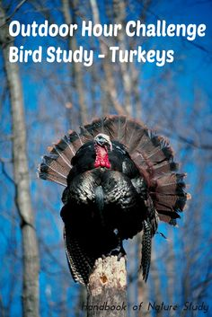 Outdoor Hour Challenge Bird Study Turkeys We are featuring some turkeys this week and I found 3 really great videos for you to watch as part of your preparation. Turkey Hunting Season, Thanksgiving Quotes, Go Outdoors, Autumn Nature, Nature Study, Nature Journal, Backyard Birds, Zoology, Walking In Nature