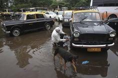 Premier Padmini taxis in Mumbai.