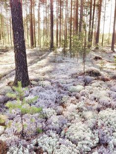 Karelia. Russia