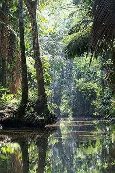 Tortuguero National Park, Costa Rica. #tropical #forest #park #CostaRica…