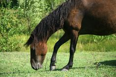 Get you horse's diet evaluated for health risks.  Learn more....