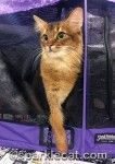 The San Diego Cat Show was a very exciting event for me! Find out what I saw, and how I did, here: http://www.sparklecat.com/diary/a-grand-old-time