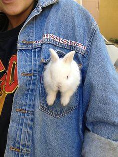 rabbit swag