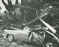1962 Columbus Day Storm (Typhoon Frieda) destroyed most of the trees on campus, damaged buildings, and killed two students. From the 1963 Oregana (University of Oregon yearbook). www.CampusAttic.com Salem Oregon, Evergreen State, Columbus Day, University Of Oregon, Washington State, Pacific Northwest, Historical Photos, North West, Wildlife