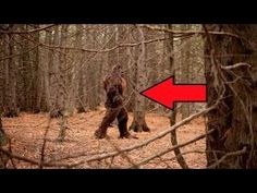 7 Most Believable BIGFOOT Sightings Video Footage of Yetti - YouTube