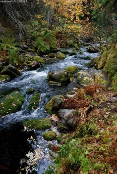 Metsäpuro - A small stream in the woods. Forests, Waterfalls, Woods, Greek, River, Bed, Nature, Outdoor, Beauty