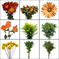 Wholesale Pumpkin Patch Wildflower Pack - Blooms by the Box