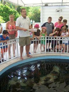 Alligator Feeding And Craft Delray Beach Floridakids Eventsmiamievents