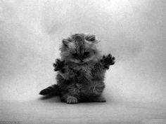 Imagem de cat, cute, and black and white Baby Cats, Cats And Kittens, C Is For Cat, Funny Animals, Cute Animals, Cute Little Things, Cat Love, Art Pictures, Kitty