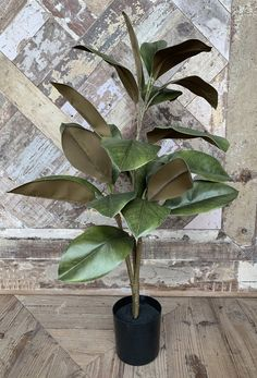 Magnolia Plant Magnolia, Plastic Pots, Red Cedar, Sweet Tea, Plants, Plastic Planters, Magnolias, Plant
