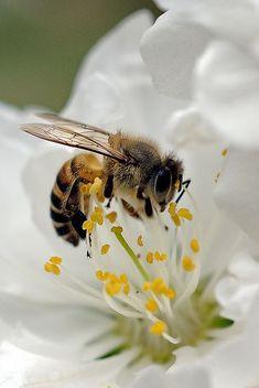 36 ideas macro nature photography beautiful butterflies for 2019 Beautiful Bugs, Beautiful Butterflies, Animals Beautiful, Foto Macro, I Love Bees, Bee Friendly, Bee Art, Bees Knees, Bee Keeping