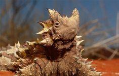 Dziwne zwierzęta, o których istnieniu mogłeś nie wiedzieć II - Joe Monster