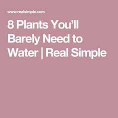 8 Plants You'll Barely Need to Water | Real Simple