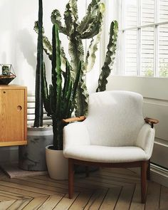 Liven up a corner nook of your house with an assortment of potted indoor plants and stylish armchair