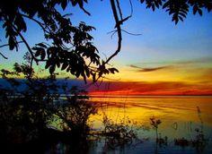 La amazonia bosque tropical mas extenso del mundo