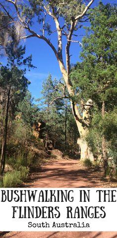 Bushwalking in the Flinders Ranges, we tackled the Wangara Lookout walk at Wilpena Pound and a walk through Alligator Gorge. Australia Travel Guide, Visit Australia, South Australia, Western Australia, Australia Holidays, Australia Funny, Victoria Australia, Melbourne Australia, Brisbane