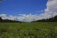 Abriéndonos paso entre la vegetación por el Amazonas desde Iquitos