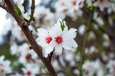 Lo imperfecto es más llamativo que lo perfecto #fotonovato #fotoamateurchile #cerrosancristobal #blanco #florblanca #diadeamigos #blanco…