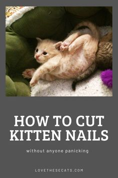 Fluffy Kittens, Kittens And Puppies, White Kittens, Fluffy Cat, Cats And Kittens, Silly Cats, Cute Cats, Funny Cats, Kitten Meowing