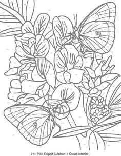 butterfly wings 12b printable color page - print as often as you ... - Advanced Coloring Pages Butterfly