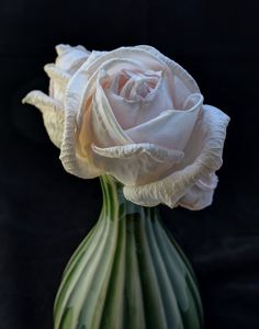 Rose, Wilting