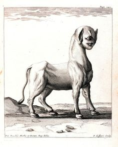 """A Monster Born of a Ewe"". In: ""Journal des Observations Physiques, Mathematiques et Botaniques …."" by Louis Feuillee, 1660-1732"