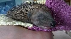Forth Hedgehog Hospital #ThanksAMillion #Charity #Giving #Fundraising