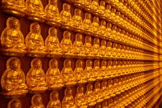 There is an astonishing variety of different Buddhist schools, lineages, and practices. Buddhist Texts, Buddhist Teachings, Meditation Practices, Guided Meditation, Buddhism For Beginners, Tantra, Schools, School, Colleges