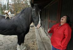"""Healing Horses: Carol Morris with Shire horse, Brenda Lee . . """"a person carrying a heavy emotional load can get close to the right kind of horse and begin to let things out that have been too long kept in."""""""