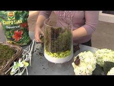 Cómo transformar un terrario en un pequeño jardín