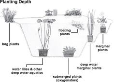 to Acclimate and Plant Your Pond Plants - Pond Pet Care Corner - PetSolutions Outdoor Ponds, Ponds Backyard, Garden Ponds, Garden Tips, Natural Swimming Ponds, Natural Pond, Water Pond, Garden Water, Water Gardens