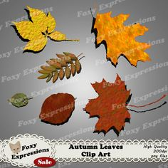 Each digital paper packs (12 sheets) are $1.  See more at www.FoxyExpressions.com Autumn Leaves Digital Clip art Pack comes with beautiful shades of autumn reds, oranges, yellows, greens, and browns. This is perfect for any project. Leaves come with a dr... #sale #foxydesign #foxyexpress