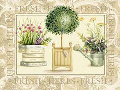 Nicola Rabbett - Herbs in Rustica Pots with Script_1.jpg